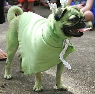 Alien Pug! Thanks Flickr!