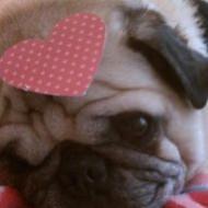 So Much Love On Valentine's Day
