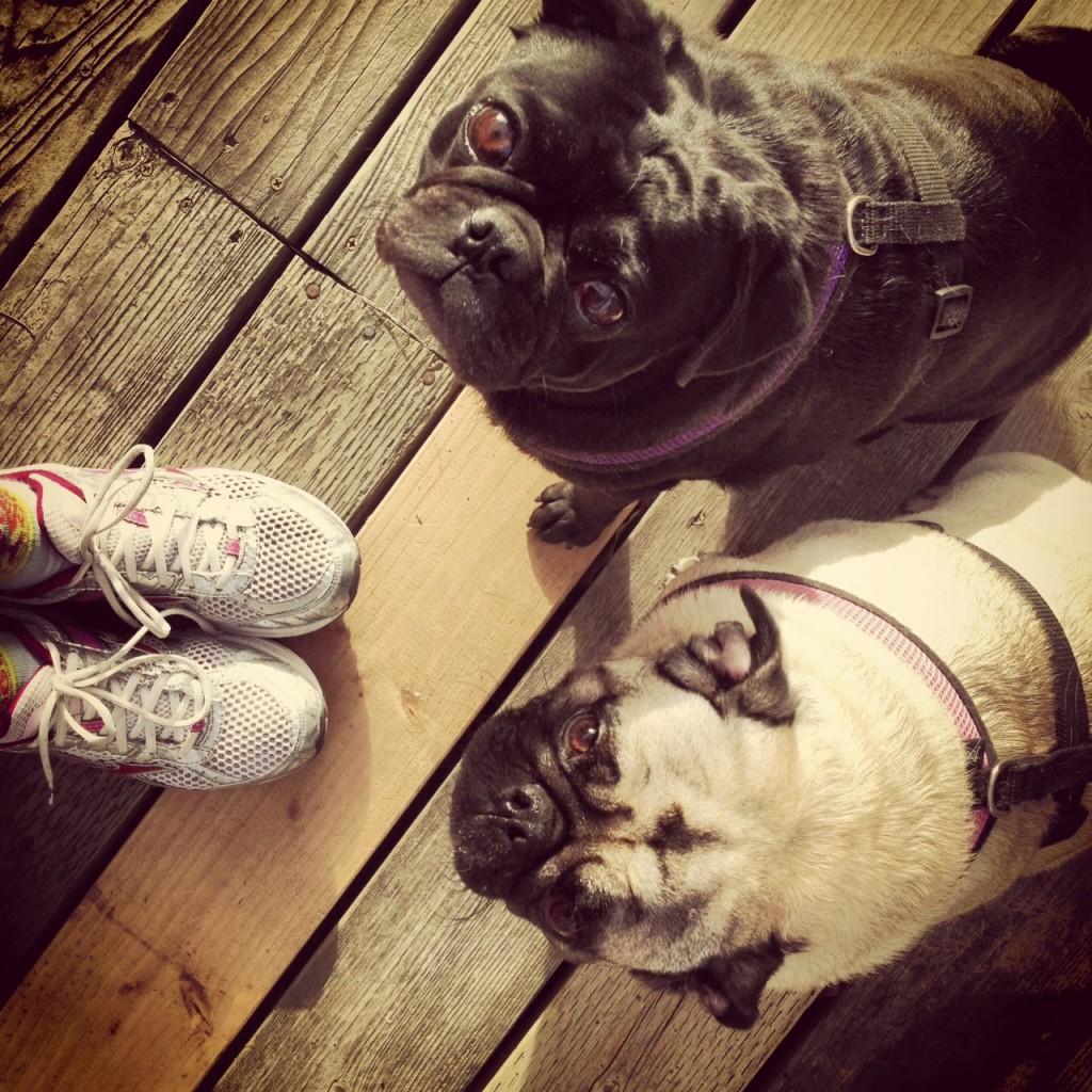 Running With pugs
