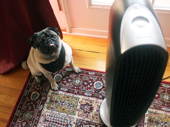 How To Allergy Proof Your Home For Pet Owners Find The Right Air Purifier