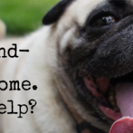 Operation: Pug Rescue!  We're Raising $500 To Save Max The Pug (and hopefully more!)