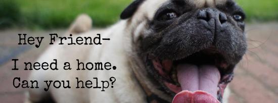 Operation Rescue Pug