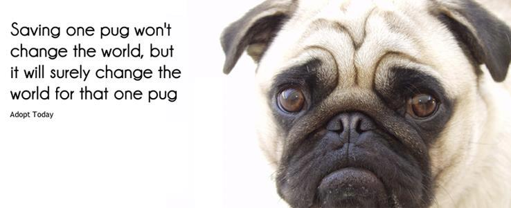 Pug Rescue Fundraiser