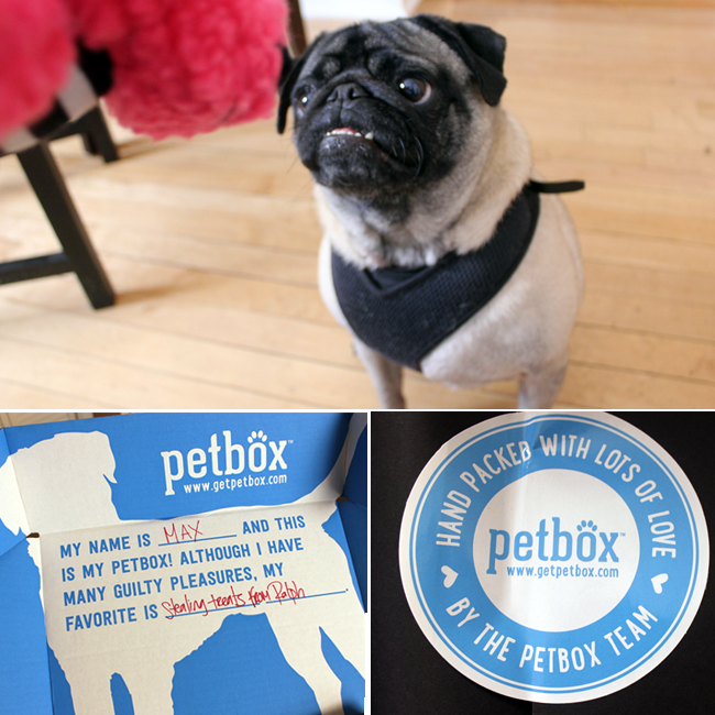 Max The Puge Reviews His Petbox from Petbox.com