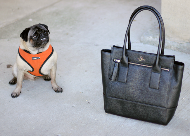 Max the pug and my Kate Spade Work Tote - FrugalBeautiful.com