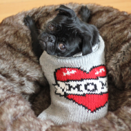 Matilda The Rescue Pug: Snorts, Puddles & Musing Of A Furry Toe Biter