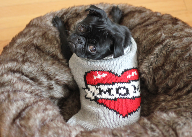 Matilda Pug Loves Mom…or so her sweater says...