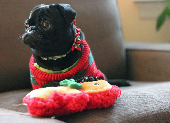 Matilda The Pug Christmas 2014