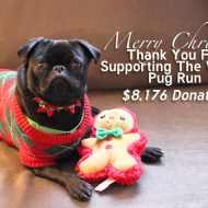 It's A Very Merry Christmas- The Virtual Pug Run Donation Totals Announced!