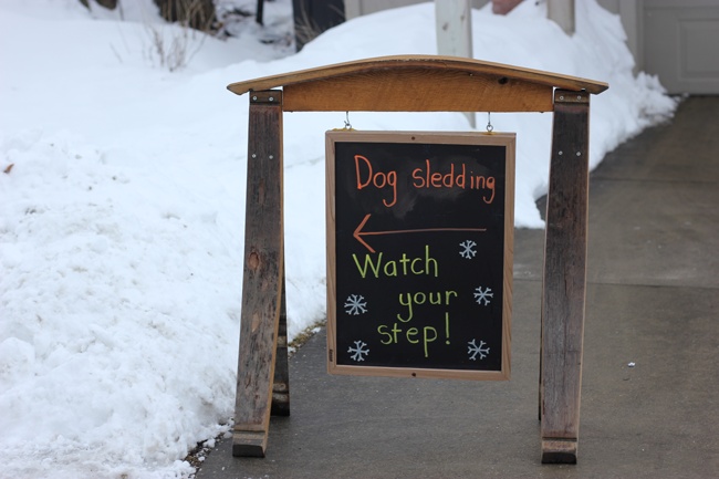 Dog sledding in Traverse City Michigan- a fun winter activity