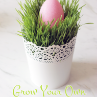 Grow your own fresh grash for spring centerpieces, it's super easy! All you need is seeds!