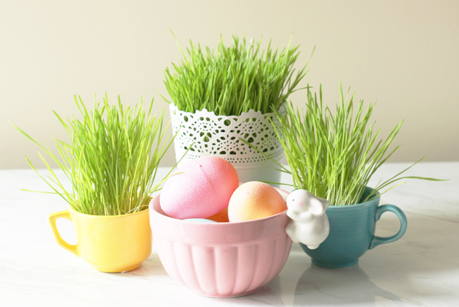 How to grow your own Easter grass for spring. Super cute and super cheap!
