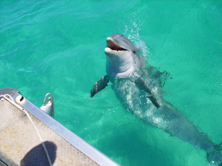 dolphin-tour-7