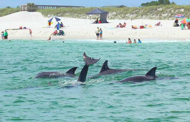 Dolphin And Snorkel Tours Panama City Beach Florida
