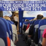 Your Guide To Airline Travel With Pets