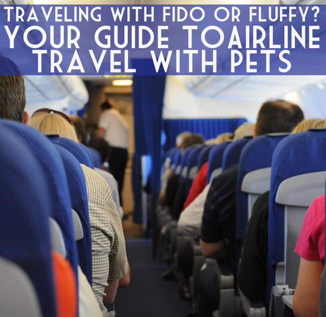 Should you fly with your pet? What's required to fly with your dog or cat? Your questions about flying with pets on most airlines