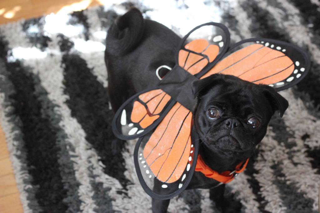 Matilda the Puggerfly