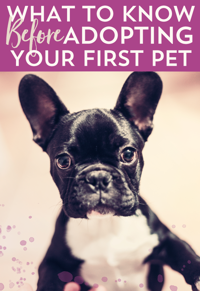 What To Know Before Adopting Your First Pet - How To Estimate Pet Costs, And What To Consider Before Becoming A Responsible Pet Parent
