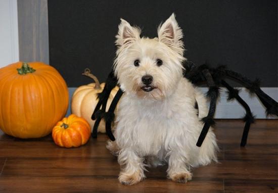 DIY pet costume