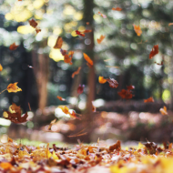Here are some helpful tips to not only save in autumn, but to prepare for the transition to winter, helping you live your best life.